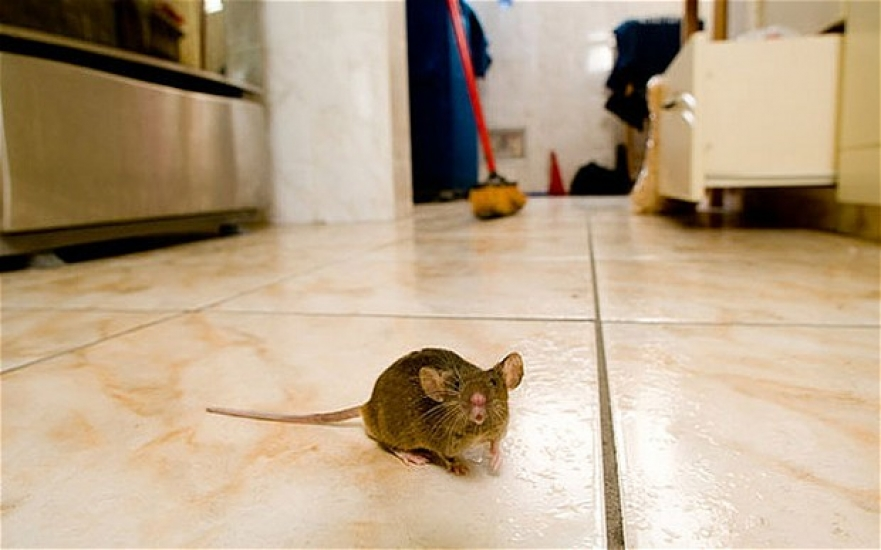 rodent removal and proofing services near you 20
