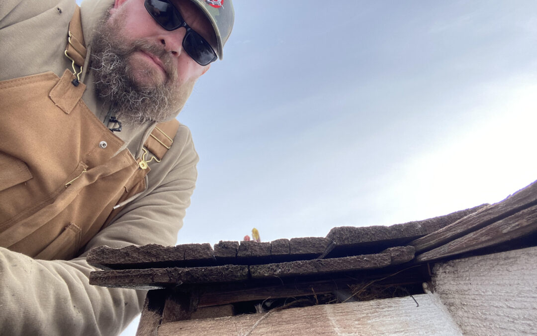 Rodent Proofing the Roof!  Are there Bird Feathers in there?
