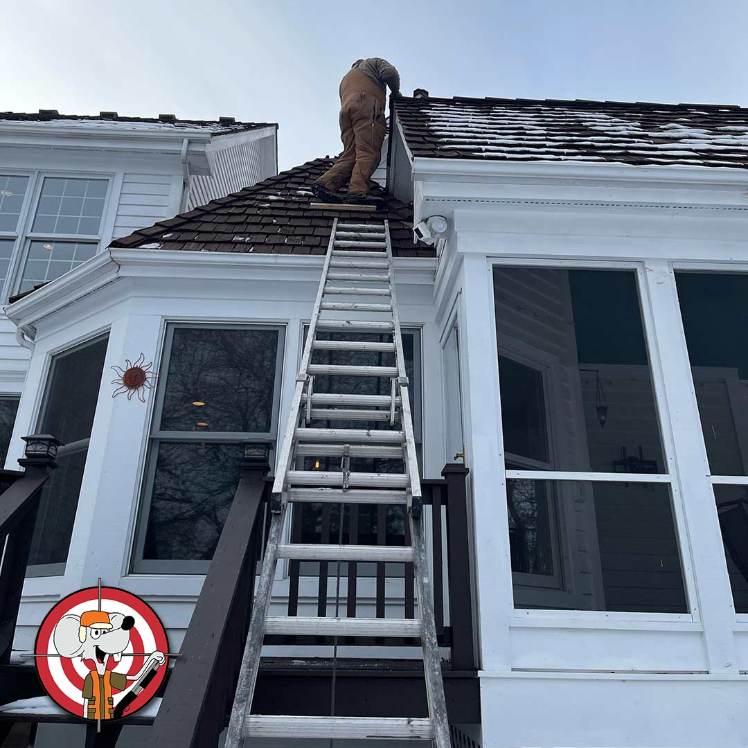Mice Exterminator Chicago - We rodent proof roofs!