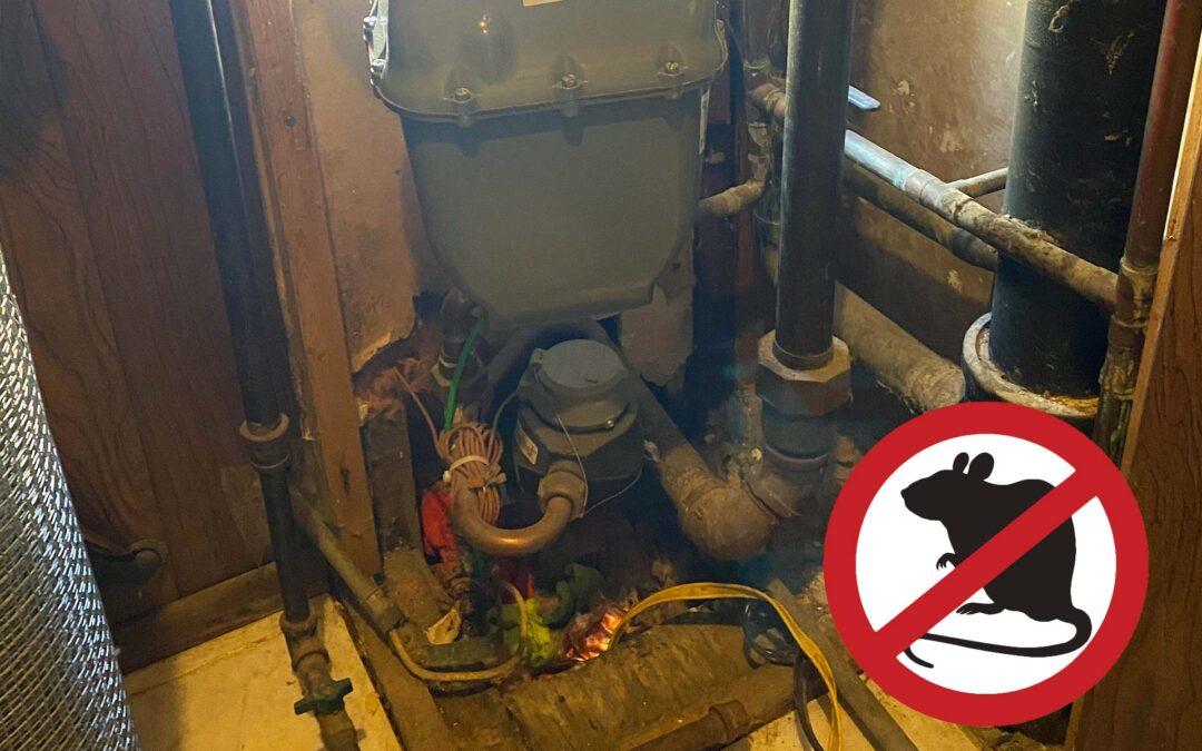 Major Rat Issues! Invasion of this Chicago Multi-unit