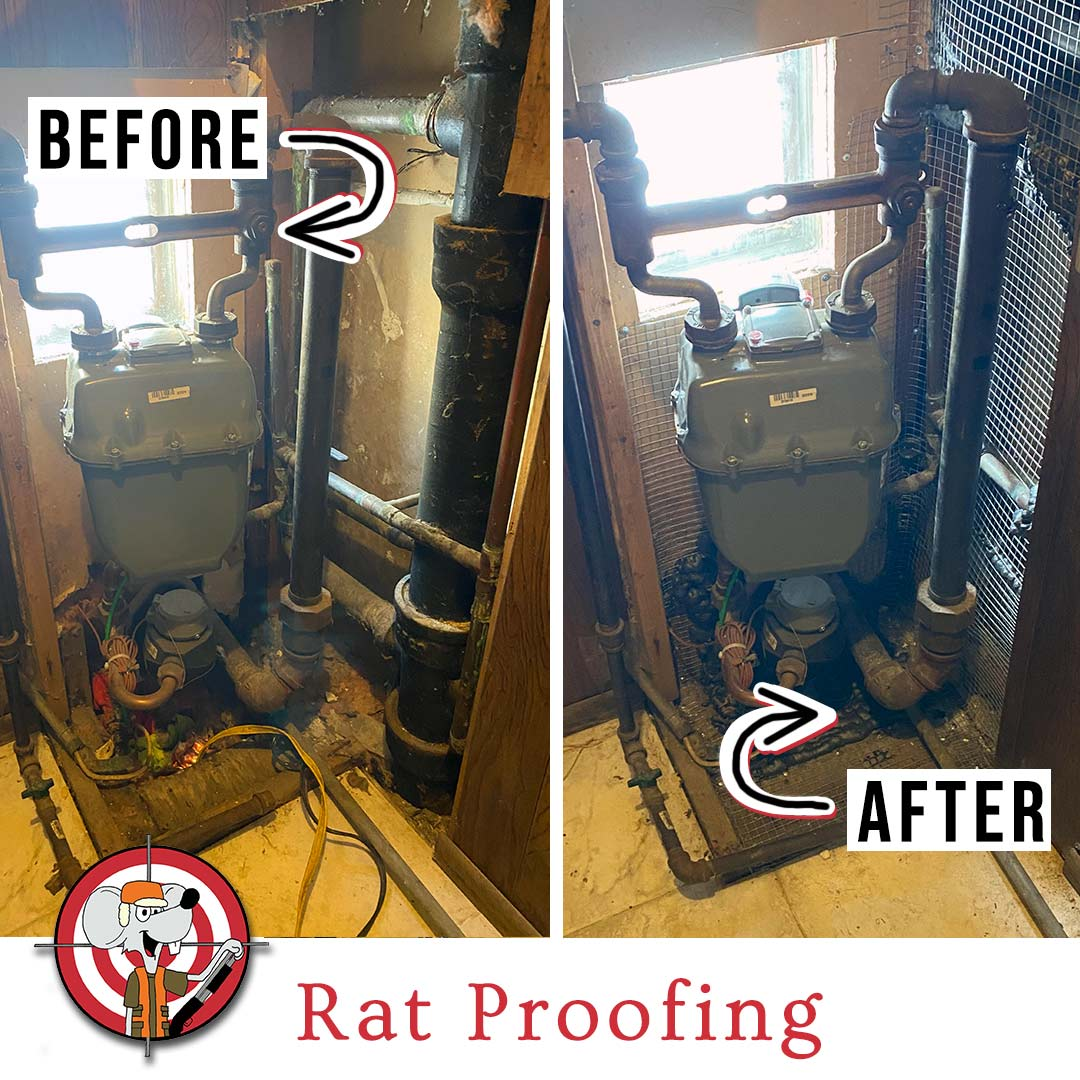 Rat Proofing a Multi Unit Property in Chicago