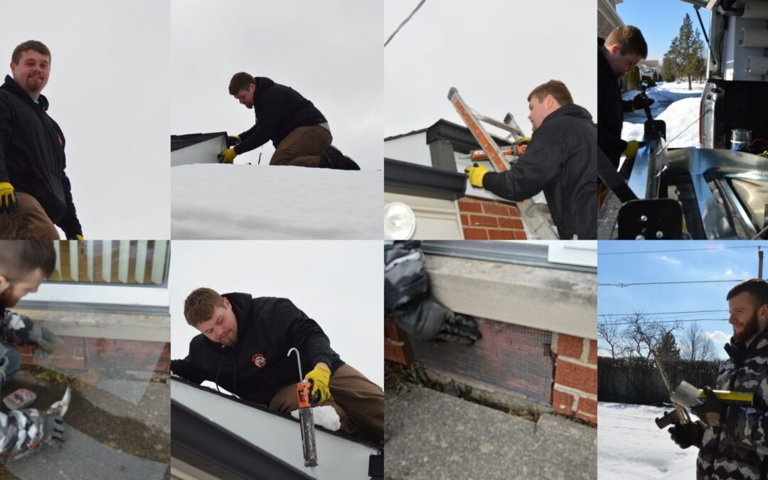 Mice Proofing Takes Us to the Roof!