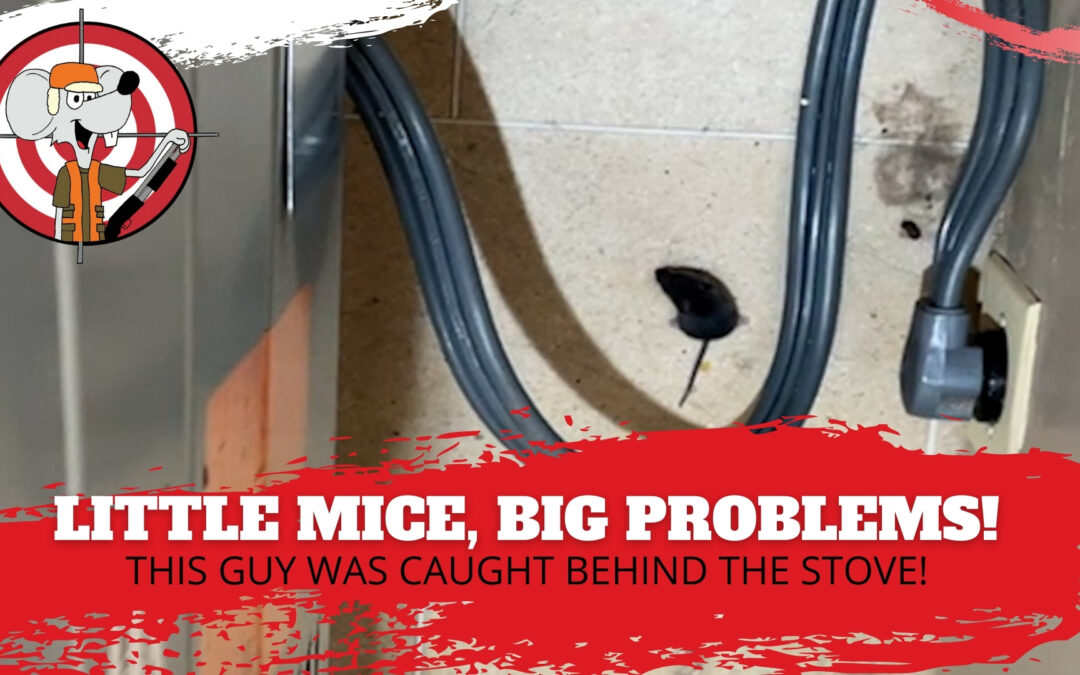 Mice Hunters Shows Up, This Mouse Gets Scared! (Video)